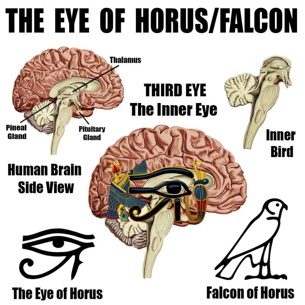 Pineal gland and the Eye of Horus
